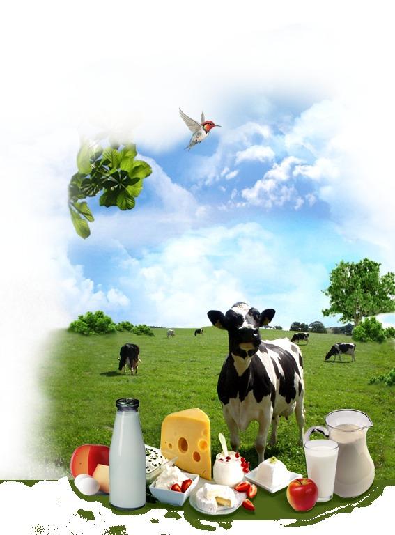 на козье молоко бывает аллергия