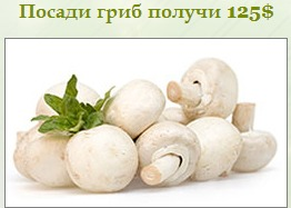 http://4put.ru/pictures/max/1013/3114185.jpg