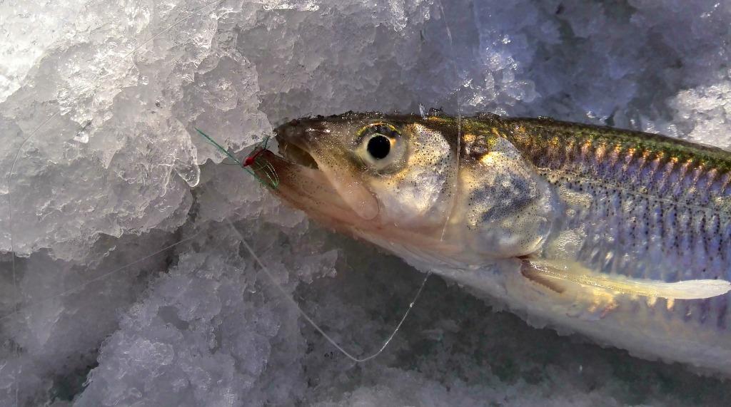 форум рыбаков приморья