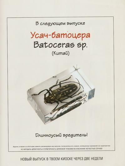 Насекомые №31 Паук-Оса (Agriope bruennichi) фото, обсуждение