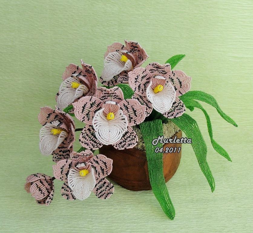 Белая орхидея Цимбидиум из