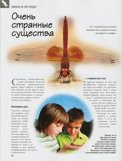 Насекомые №32 Усач-Батоцера (Batoceras sp.) фото, обсуждение
