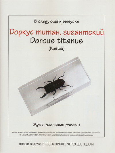 Насекомые №33 Доркус-Титан (Dorcus titanus) фото, обсуждение