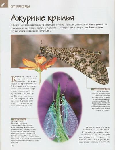 Насекомые №34 Жук-олень (Odontolabis sp) фото, обсуждение