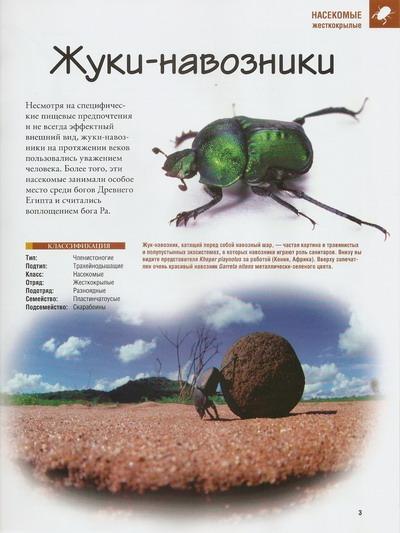 Насекомые №35 Сизифус (Sisyphus sp.) фото, обсуждение