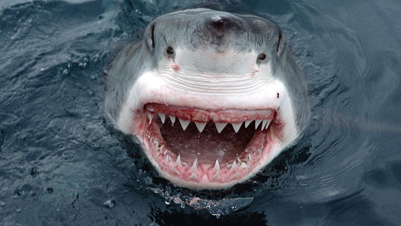 Акула откусила пенис 13 фотография