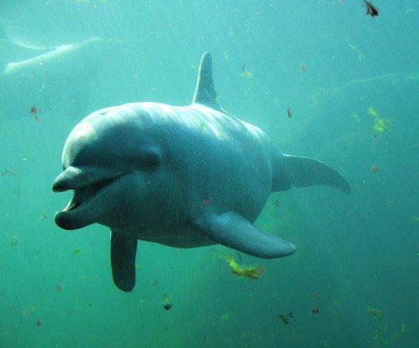 Дельфин - маньяк!