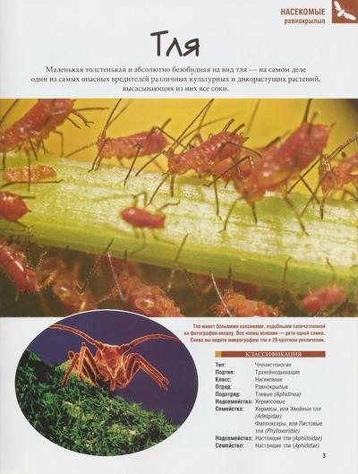 Насекомые №36 Плавунец (Dytiscus sp.) фото, обсуждение