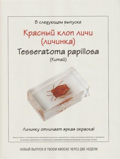 Насекомые №37 Красный клоп Личи (личинка) (Tesseratoma papillosa) фото, обсуждение