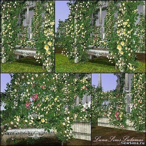 плетущиеся цветы фото: