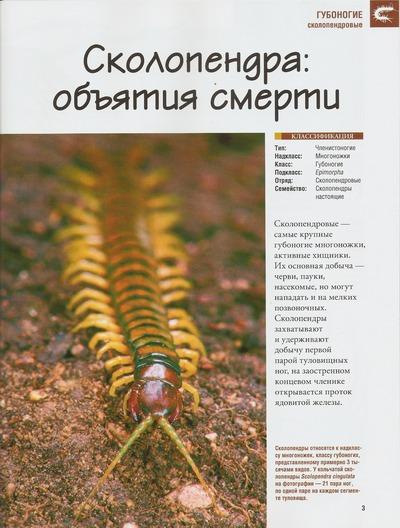 Насекомые №38 Сколопендра (Scolopendridae) фото, обсуждение