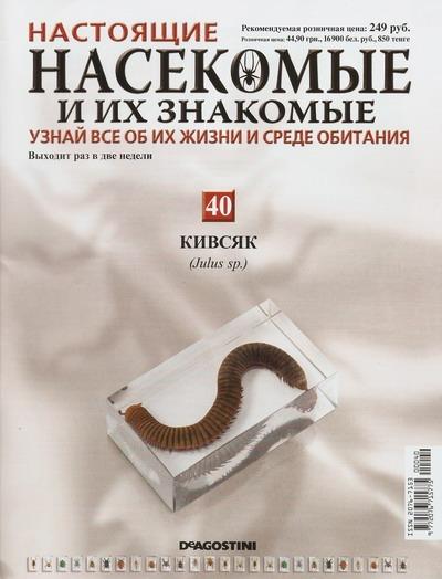 Насекомые №40 Кивсяк (Julus sp.) фото, обсуждение
