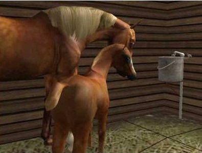 Лошади, и все, что с ними связано 532067