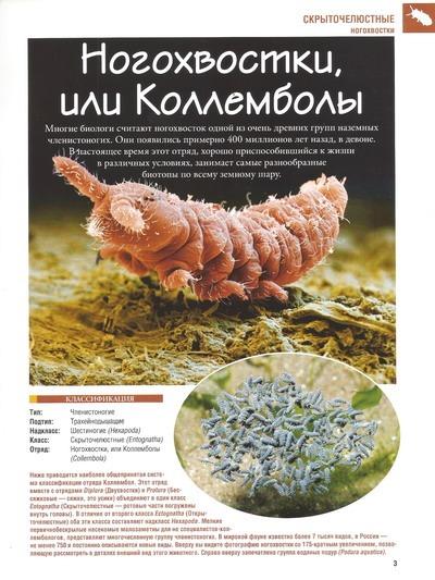 Насекомые №43 Дозорщик (личинка) (Anax sp.) фото, обсуждение