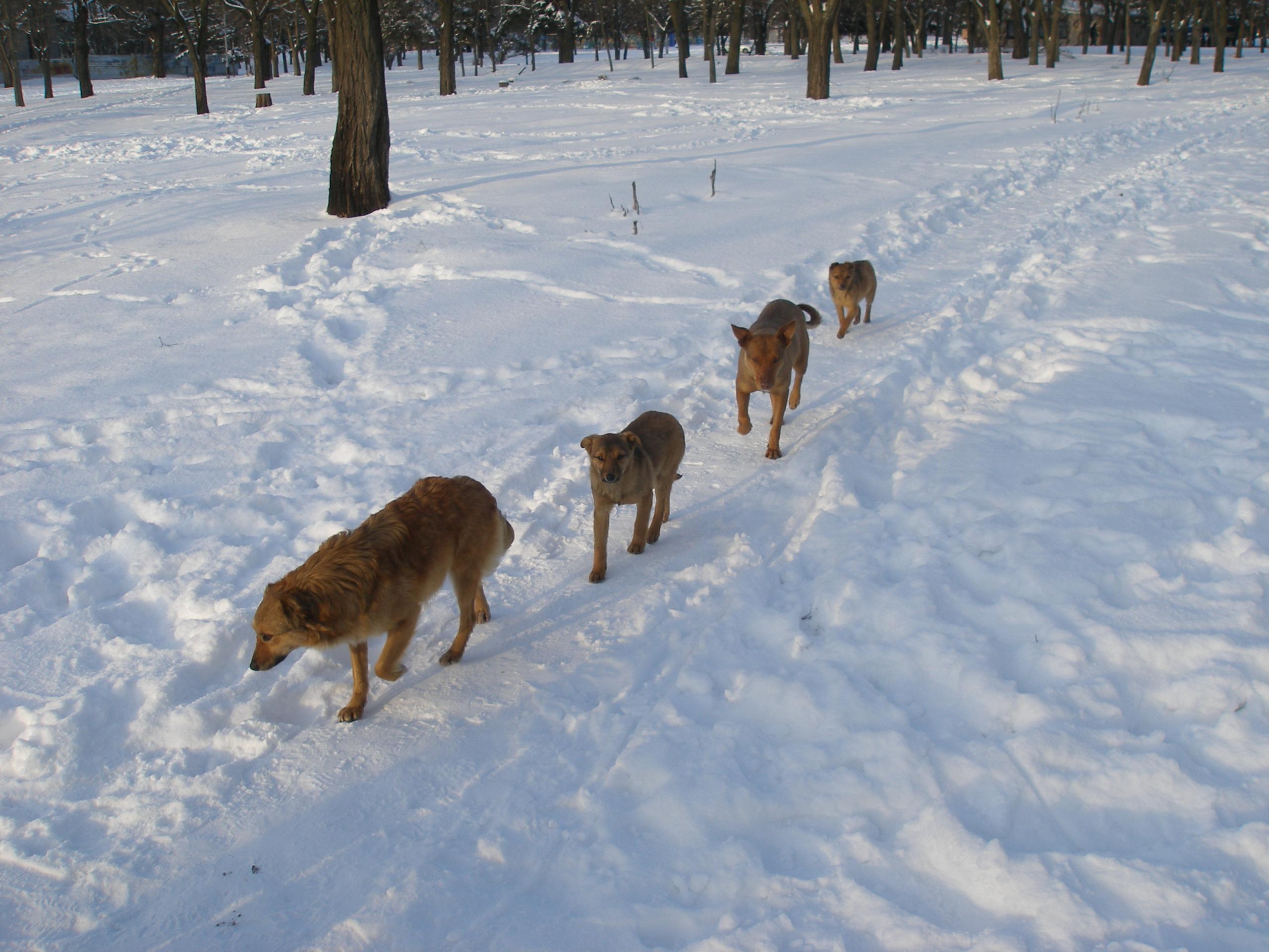 Зима!!!!Снежная  сказка! 696536