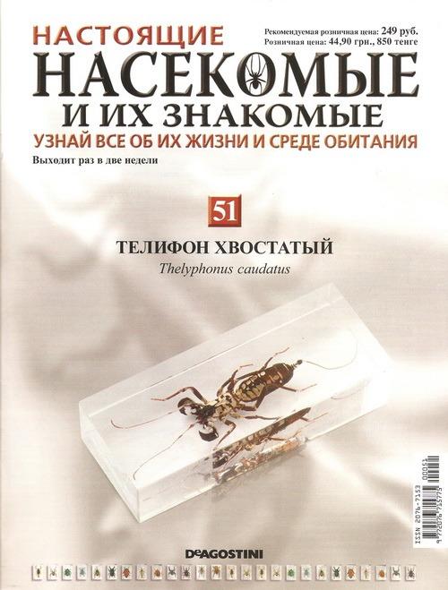 Насекомые №51 Телифон хвостатый (Thelyphonus caudatus) фото, обсуждение
