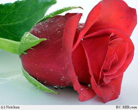 http://4put.ru/pictures/max/239/736883.jpg
