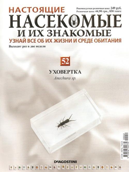 Насекомые №52 Уховертка (Anechura sp.) фото, обсуждение