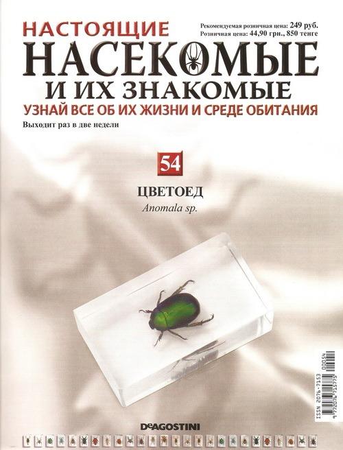 Насекомые №54 Цветоед (Anomala sp.)