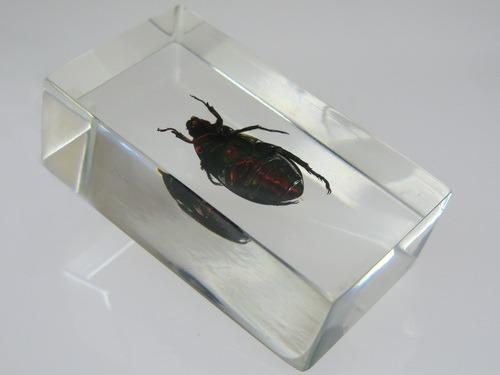 насекомые и их знакомые златка