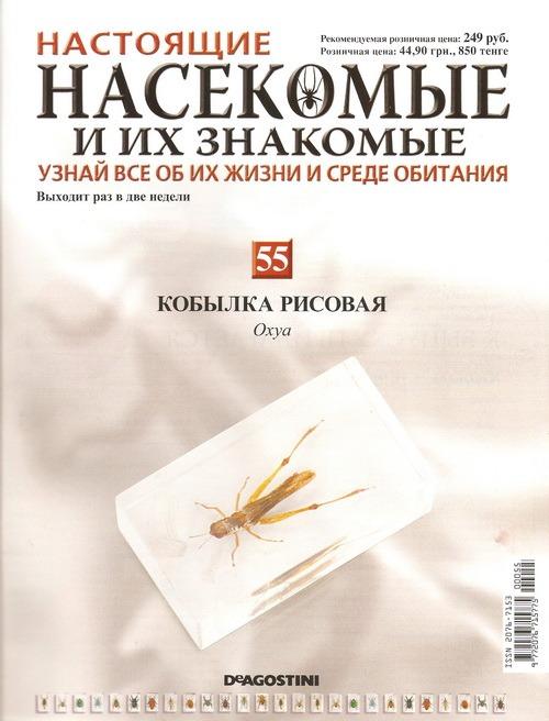 Насекомые №55 Кобылка рисовая (Oxya)