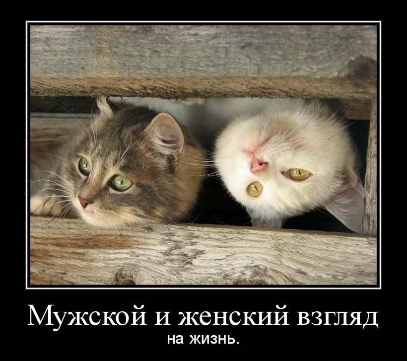 ... прикольные картинки смешно картинки: fon1.ru/load/65-1-0-3312