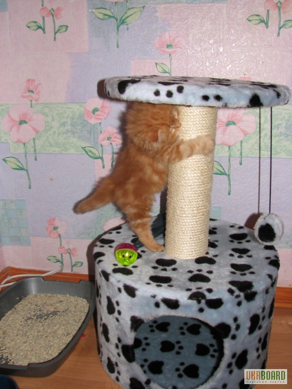 Домик когтеточка для кошки своими руками фото мастер-класс чертежи