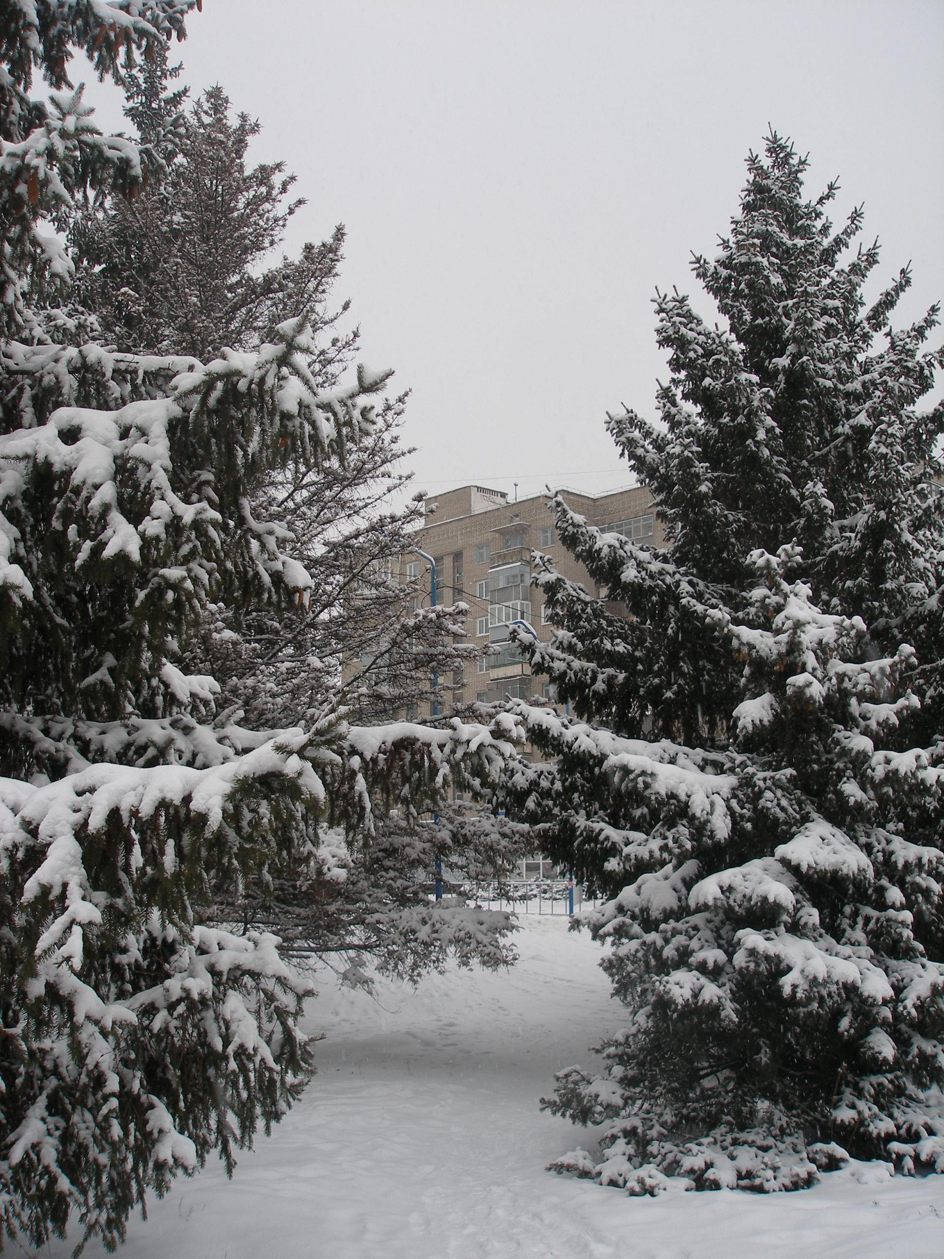 Зима!!!!Снежная  сказка! - Страница 2 845848