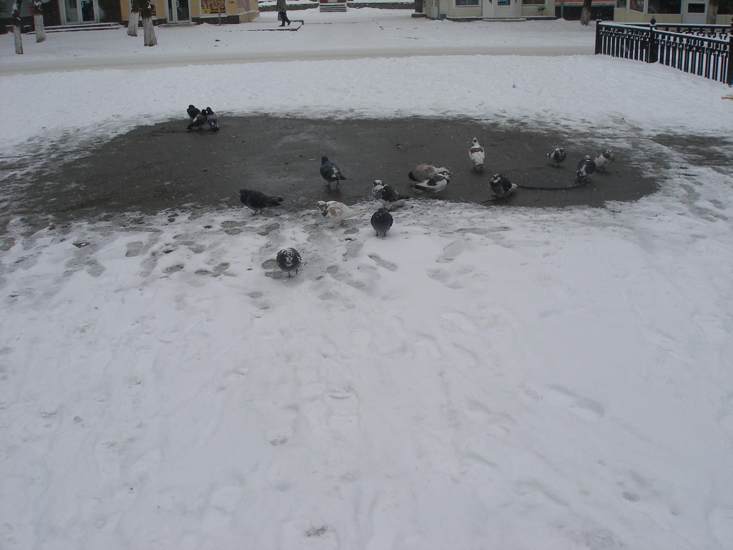 Зима!!!!Снежная  сказка! - Страница 2 845850