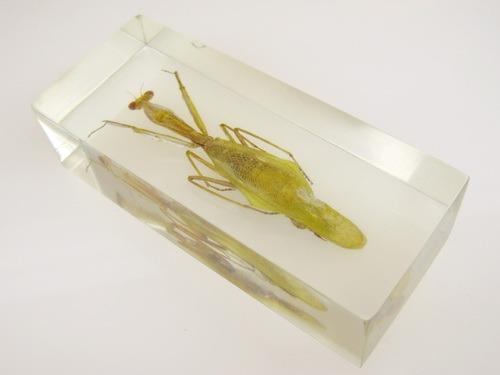 Насекомые №57 Обыкновенный богомол (Mantis religiosa)