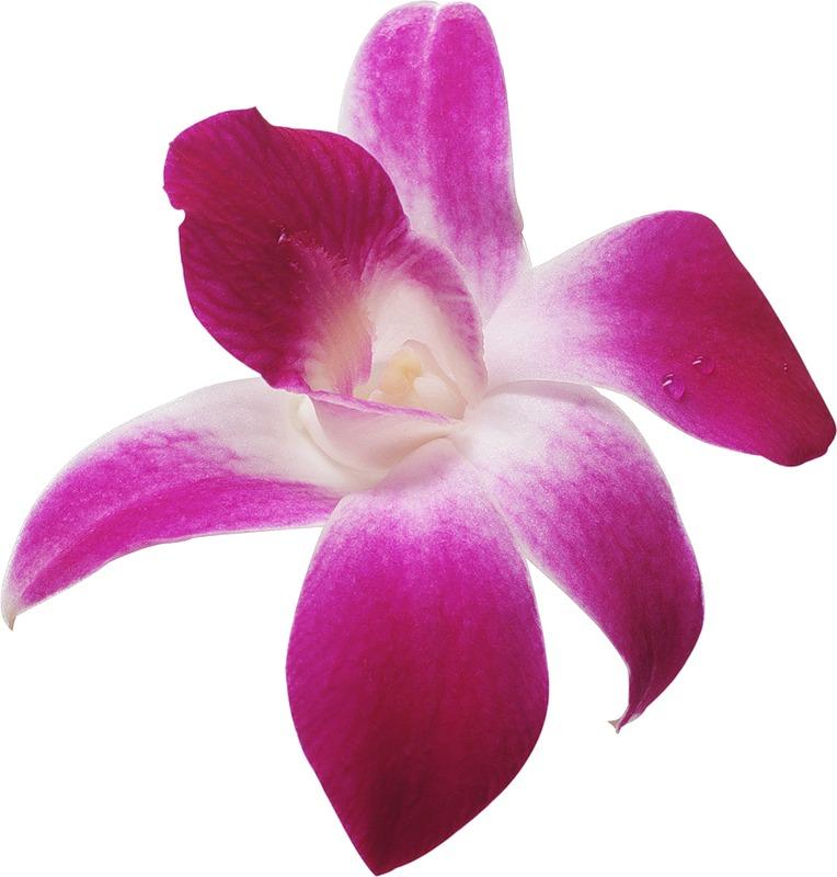 Картинки цветов гиф 6