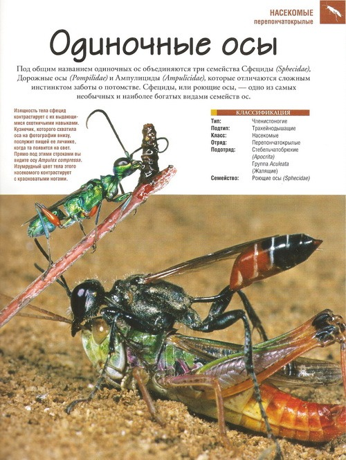 отзыв о журнале насекомые и их знакомые
