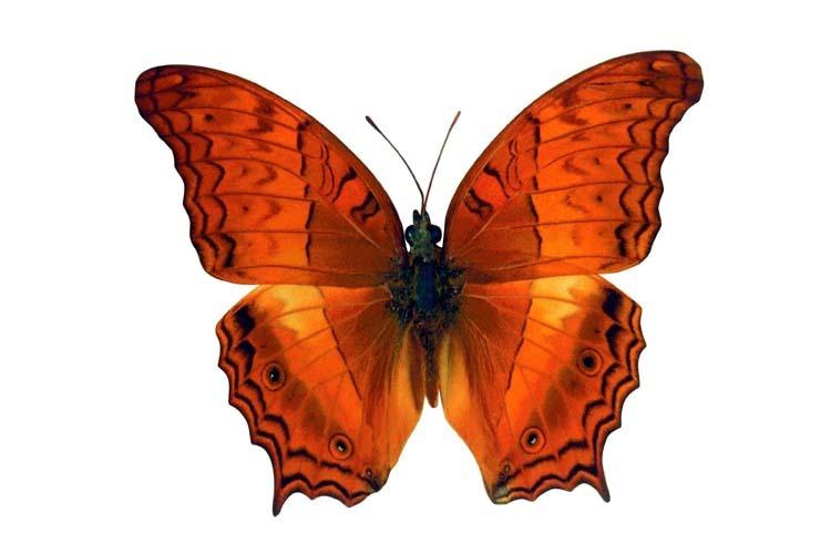 Бабочки Обои рабочий стол
