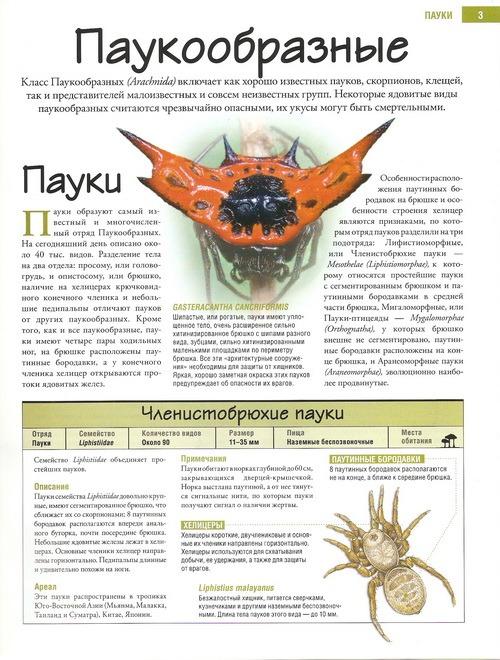 Насекомые №61 Жук-бронзовка (Dicronocephalus sp.)