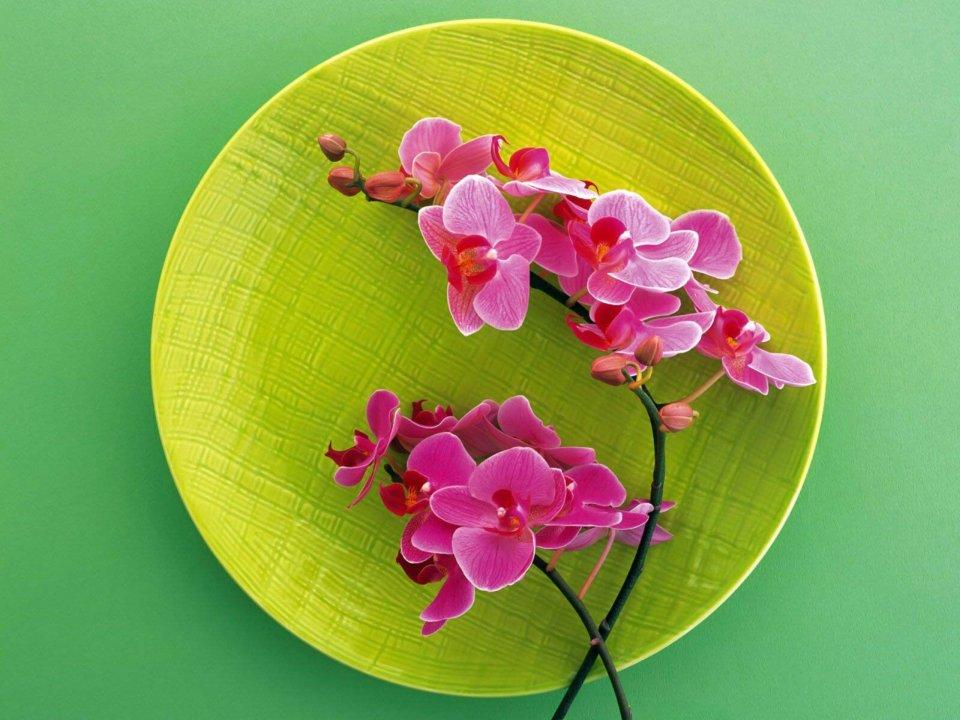 Ссылки на картинки с цветами 6