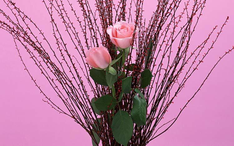 Цветы Розы Обои рабочий стол