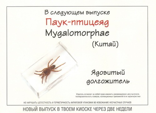 Насекомые №64 Паук-птицеяд (Mygalomorphae)
