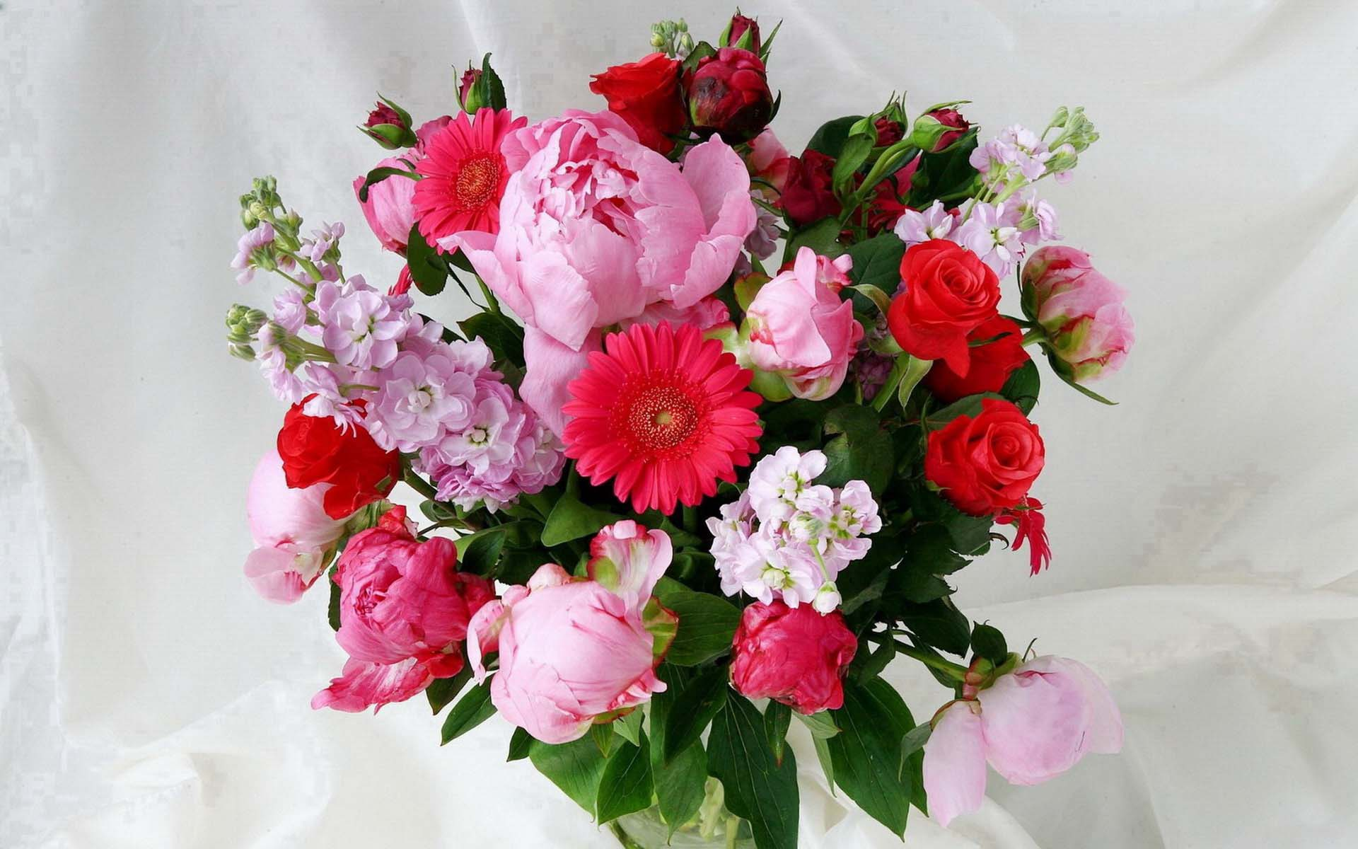 Герберы фото цветов