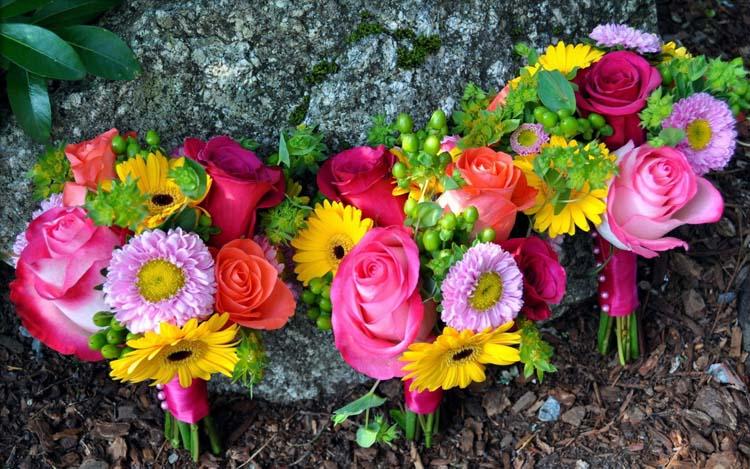 цветок букет фото