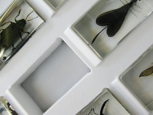Насекомые №65 Царственная цикада Помпония (Pomponia imperatoria)
