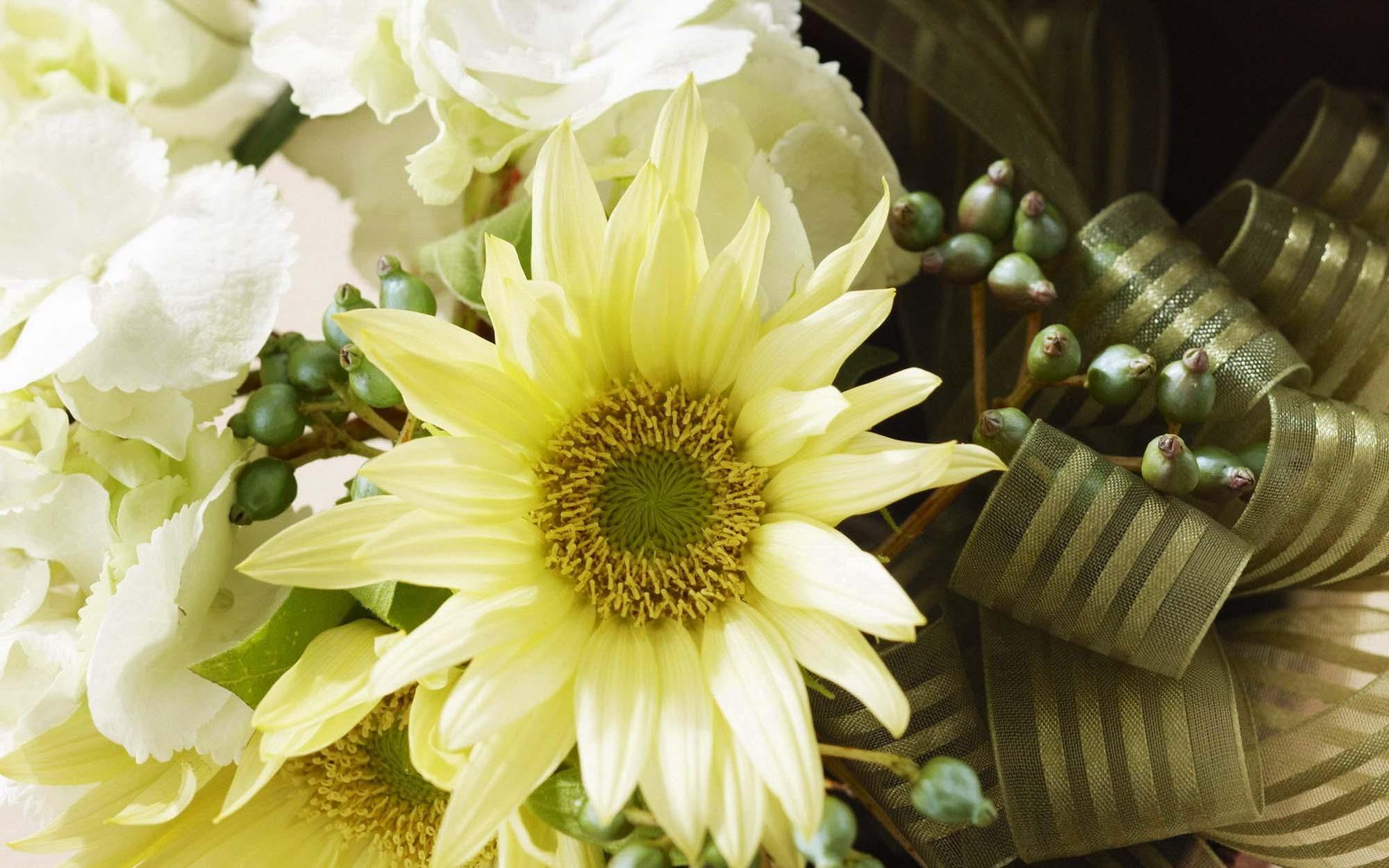 Васильки на фотографии картинки цветов васильков на лугах