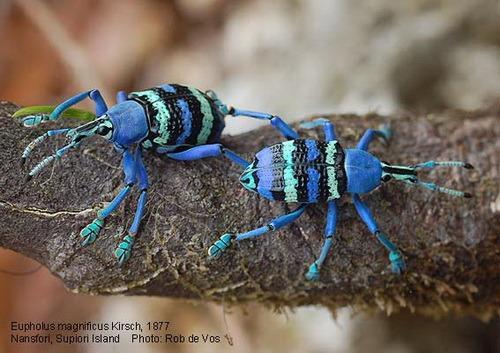 насекомые их знакомые даты выхода