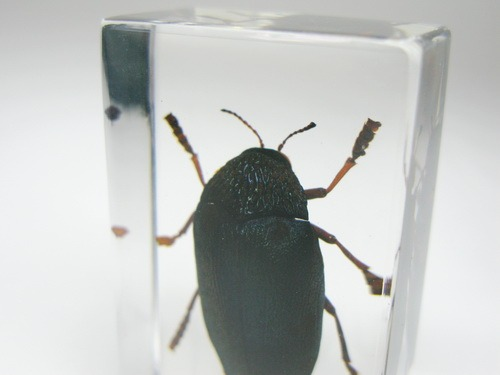 Коллекция насекомых Robin73