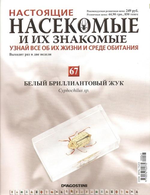Насекомые №67 Белый бриллиантовый жук (Cyphochilus sp.)