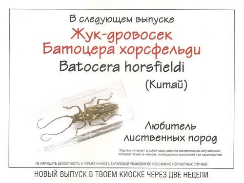 Насекомые №69 Жук-дровосек Батоцера Хорсфельди (Batocera horsfieldi)
