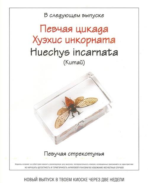 Насекомые №70 Клоп-крестоносец (Mictis profana)