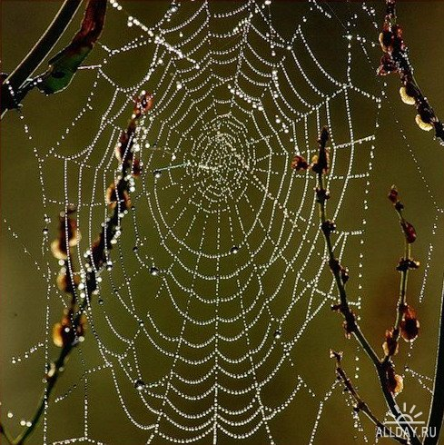 Как сделать паутину человека паука своими руками фото 908