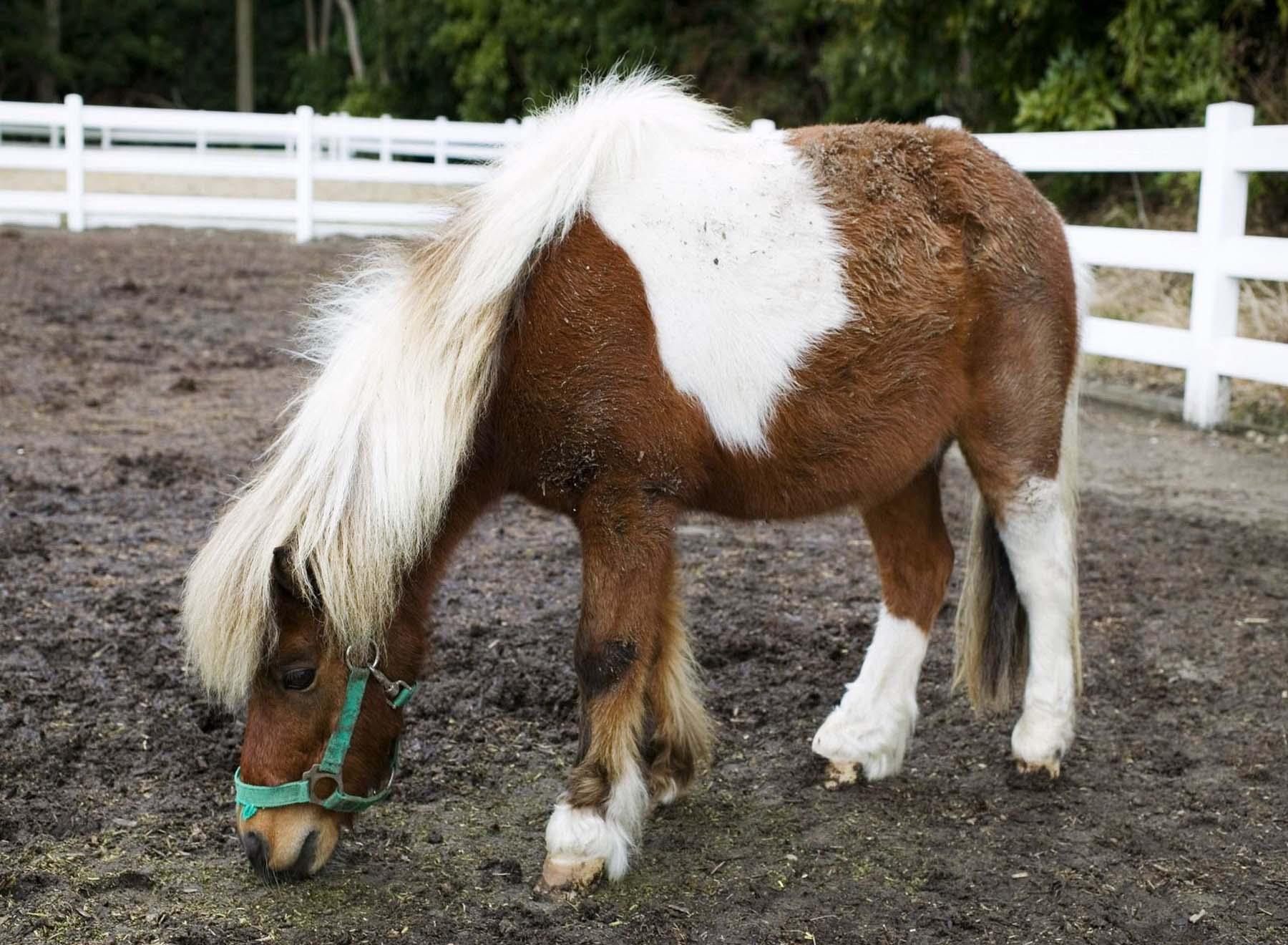 Обои Лошади Животные фото.