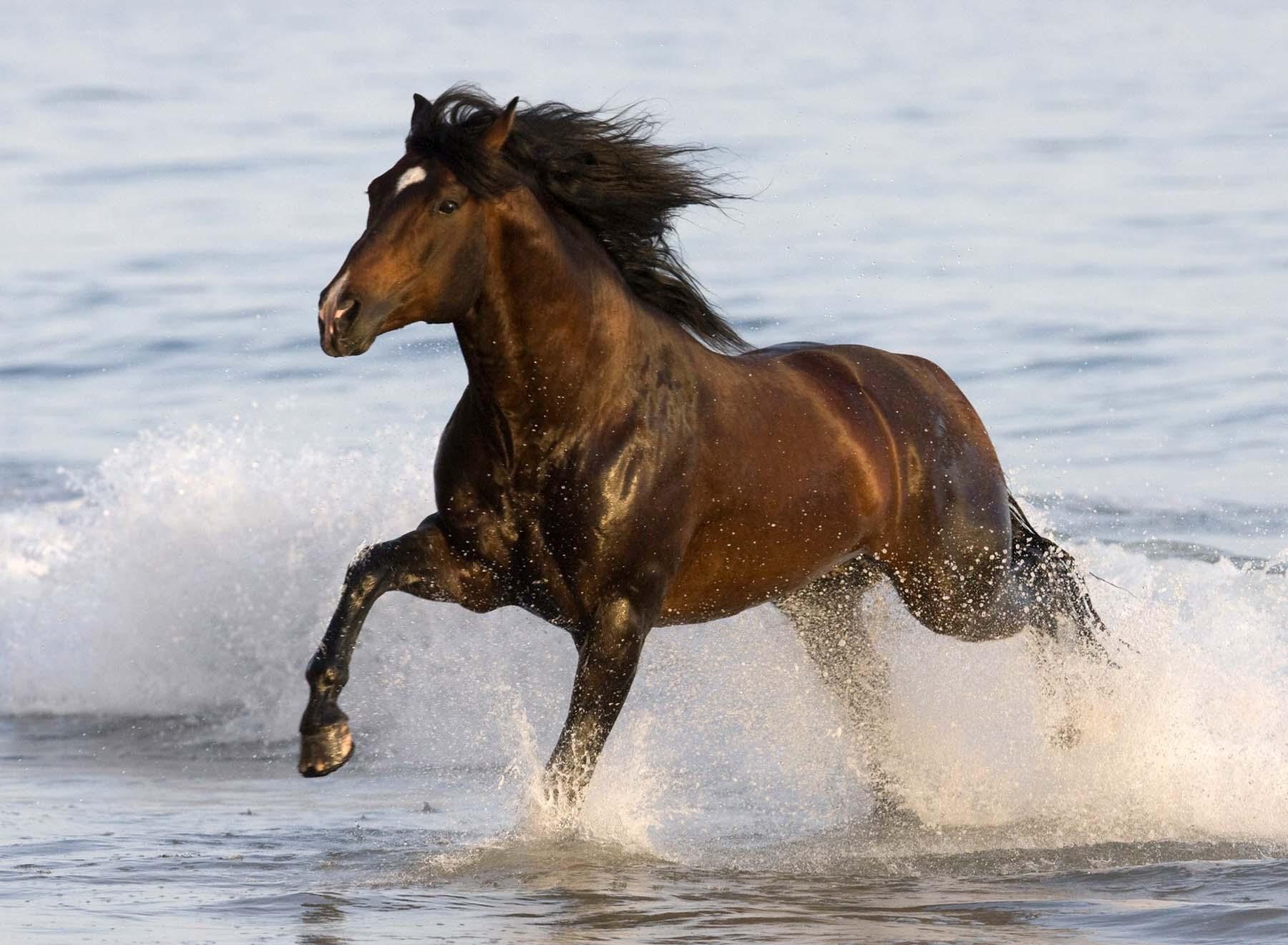 3д лошади обои для рабочего стола № 564021 без смс