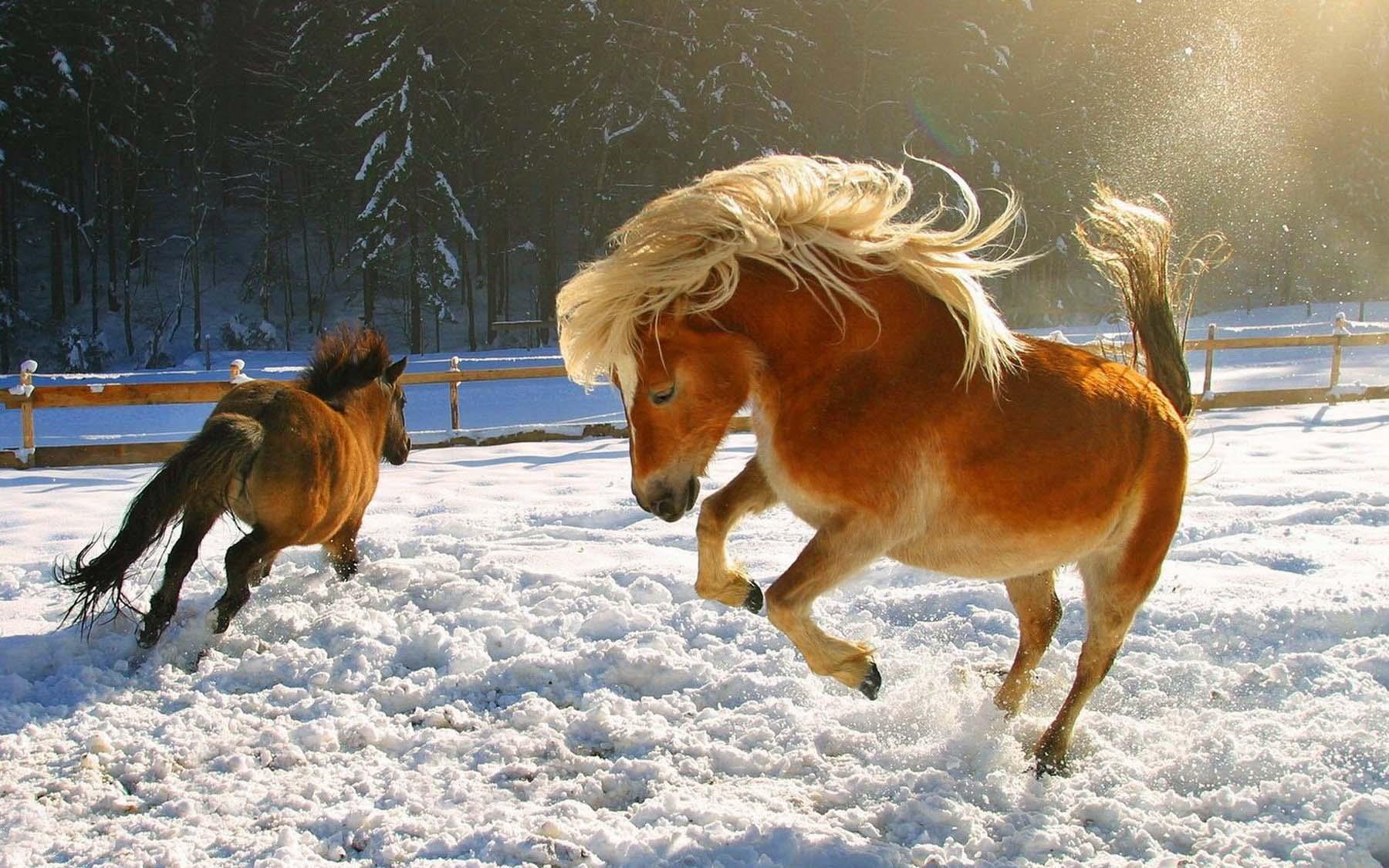 обои для рабочего стола зимние лошади № 465193 загрузить